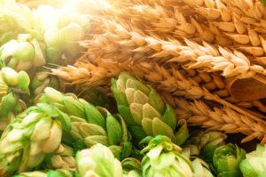 Domaine SCIENCES Agronomie et science des aliments - Livres scientifiques et techniques