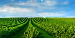 Collection Agriculture, science des aliments et nutrition - Livres scientifiques et techniques